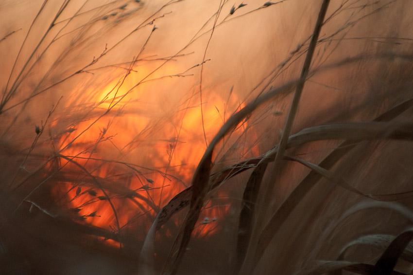 """Grasslands Sunset"""" width=""""850"""" height=""""565"""